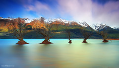 Willow Trees of Glenorchy photo by Fakrul J