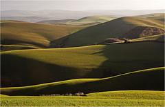 Eventually,the green came. Cordoba countryside. Andalucia photo by zanzibarcordoba