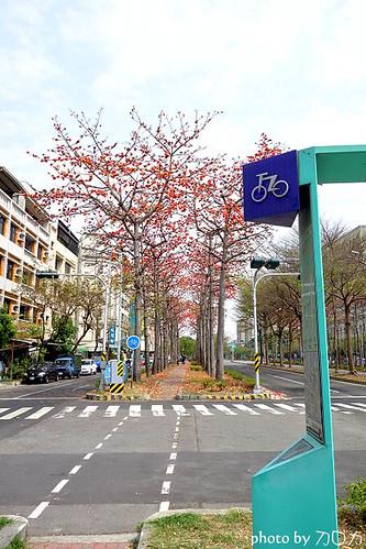 21_台南東豐路木棉花