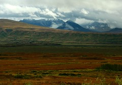 Denali Landscape in Autumn Color photo by Cole Chase Photography