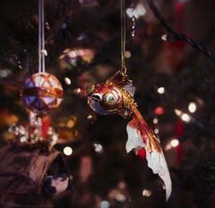 fishy xmas photo by ___rei