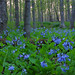 Messenger Woods Nature Preserve Image: Bob Callebert
