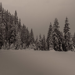 Winter forest photo by Tore Thiis Fjeld
