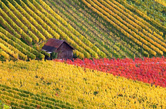 Little House in the Autumn Vineyard photo by Habub3
