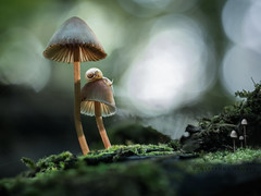 2 mushrooms - 2 snails photo by marianna_armata