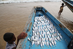 Fish - Puri, India photo by Maciej Dakowicz