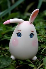 Rabbit egg photo by ♪♫Sweet Panda♫♪