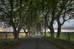 The Dark Hedges photo by Gareth Wray Photography -Thanks = 2.5 Million Hits