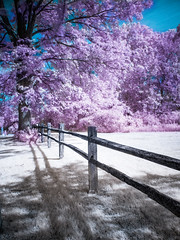 Split Rail Fence Infrared photo by Painted Light Studio