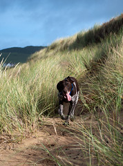 Dune Dog Bert - Explore 05.01.14 photo by Peaf79