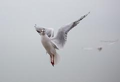 All in the air, belgian seaside, Belgium photo by monsieur I