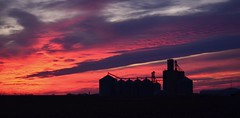 Grain Elevators and Bins photo by forestforthetress