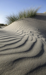 Dune photo by Thrift