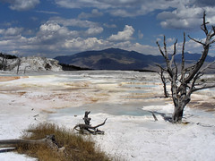 Mammoth Hot Springs photo by Valentina Sokolskaya