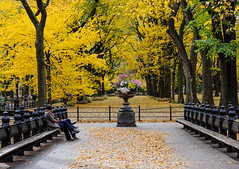 Morning coffee at Central Park photo by Gene Krasko Photography