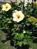 Photo 07-07-13 11 41 19