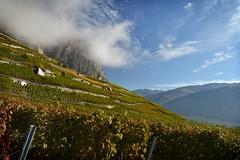 Les vignes dans le ciel - Vineyard in the sky 2 photo by Solange B