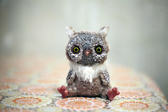 owl photo by oso_polar