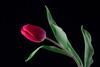 32914767291_804393daed_t