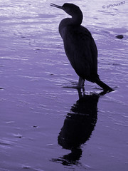 The Cormorant's Silhouette photo by Steve Taylor (Photography)