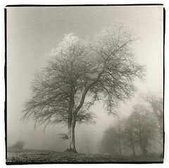 Fog on the Hill of Slane, Co Meath, Ireland (Print) photo by Martins Photo Scrap Book