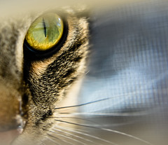 Eye of the Hunter - Explore#7  (01/06/2014) photo by Mrs Sarah Pierce Photography