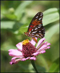 Butterfly photo by blsturman