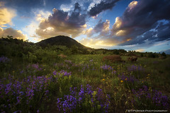 Foothills, Wildflowers photo by Tyler Porter Photography