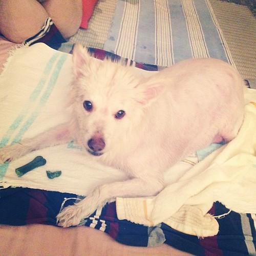 夏天洗澎澎好清爽 Refreshing #熊寶 #dog #doglife #dogdaily #dogstagram #instadog #bath