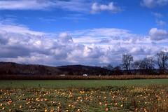 Sky & Pumpkins photo by Rafakoy