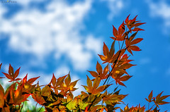 leaves and sky photo by loco's photos