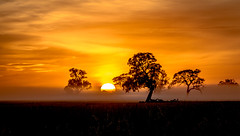 Foggy Sunrise - Penola Australia photo by Jacqui Barker Photography