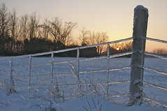 Icy Fence ~ HFF! photo by Nancy A-T ~ obsessive gardener