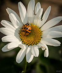 Daisy and the Ladybug photo by mahar15