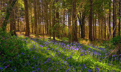 DAPPLED LIGHT IN A WOODS photo by snaps11