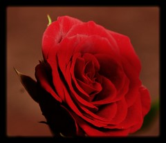 Beauty is a Gift of God... photo by -Reji