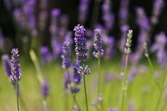 Grasse photo by Marielle B-R