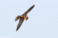 Hobby - In Flight Meal - Explored! photo by Ashley Cohen Photography