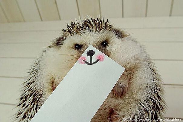 不过其实刺猬其实是超可爱的小宠物呢!