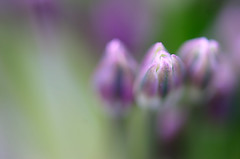 Hypnose photo by Bellatchitchi