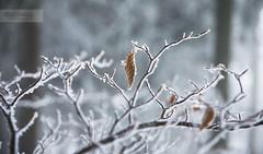 winter impressions photo by desomnis