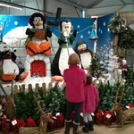 Longacres chirstmas display<br/>17 Nov 2013