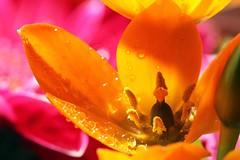 Saturated Orange photo by pim van den heuvel