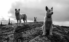 Superdogs photo by Sandra A.-B.