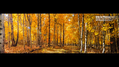 fall color in aspendell photo by Eric 5D Mark III