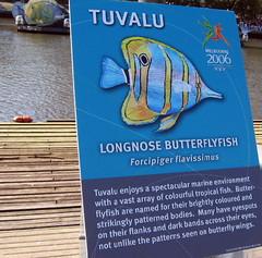 tuvalu fish2