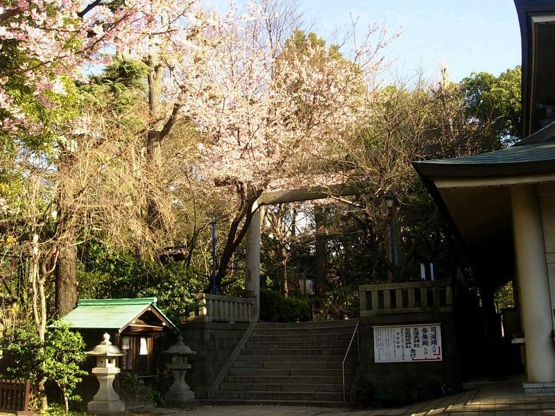 Sakura, torii, Gojo Shrine.