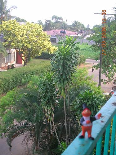 1Youpi in Monrovia