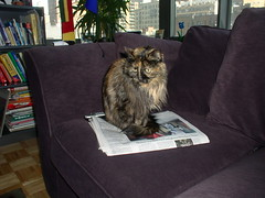 Zazie and the Sunday Paper