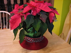or a poinsettia cozy